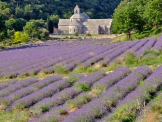 Lavendelfeld Abtei Senanque
