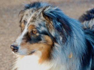Hundegesicht Hoch Maria